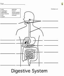 Mr Slavich U0026 39 S Science Class  Life Science Digestive System