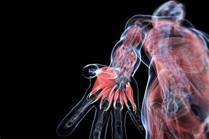 Human Study Anatomy Muscles Hololens Technology