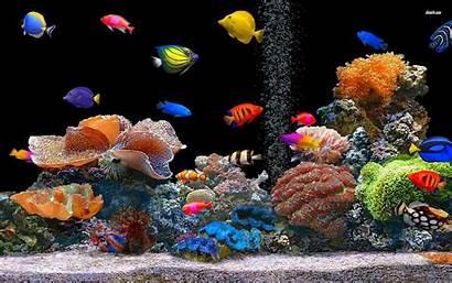 Fish Tropical Desktop Animal Oscar 1080 1920