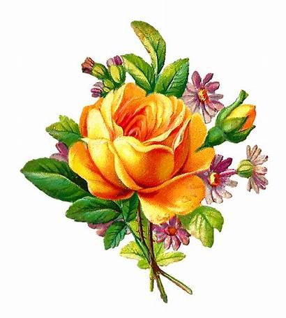 Rose Yellow Clip Bouquet Clipart Daisies Digital
