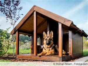 Hundehütten Selber Bauen : isolierte hundeh tte selber bauen anleitung in 7 schritten ~ Eleganceandgraceweddings.com Haus und Dekorationen
