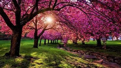 Scenery Spring Desktop Wallpapers Pink Nature Tree