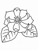 Magnolia Coloring Pages Flower Flowers Print Printable Getcolorings Pa Recommended sketch template