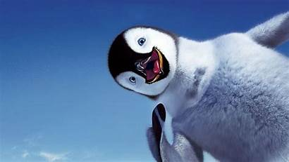 Funny Penguin Animals Tablet Pc 1080p