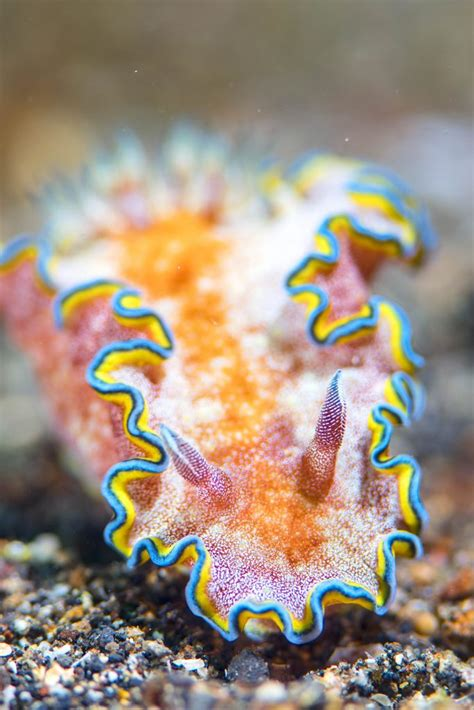 Stunning photos of alien-looking sea creatures look out of this world - Storytrender