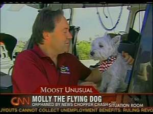 Molly the Flying Dog - Owner died in Helicopter Crash