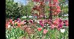 Vienna Virginia Blooms in Spring