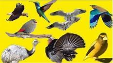 Learn Name Of Birds In Marathi English पक ष च न व