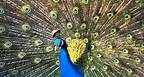 My Choice - Waldo de los Rios: Mozart Symph No. 40 - Beautiful Birds