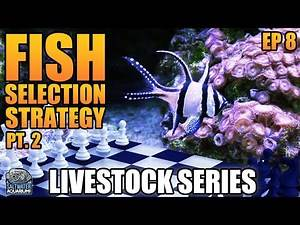 Stocking Strategy Part 2 - Picking Fish for Your Saltwater Aquarium - Livestock Series