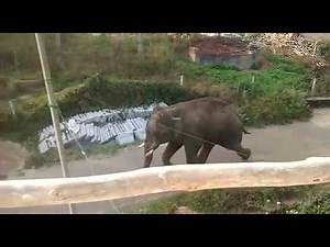 Indian Elephant attack in a village