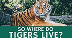 Where Do Tigers Live? Quick Facts about Tiger Species, Population and Habitat