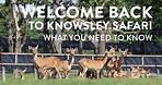 Things you need to know about your COVID safe visit to Knowsley Safari