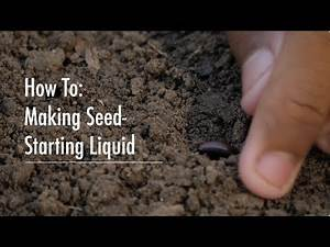 A Nourishing Recipe to Boost Seedling Growth