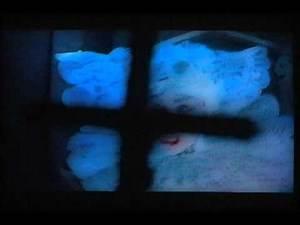 Dracula Studies: Lucy Westenra 3/4