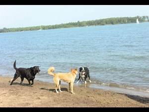 Dogs Just Wanna Have Fun In The Sun on Cherry Beach - Hot Diggity!
