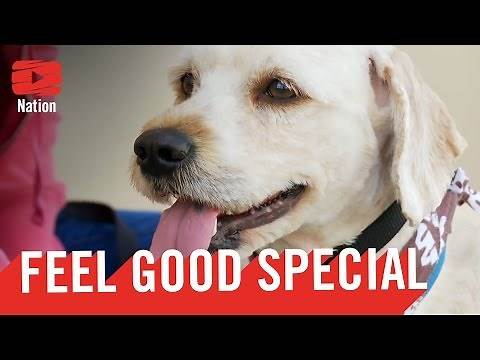 7 Videos That Will Make You FEEL GOOD!