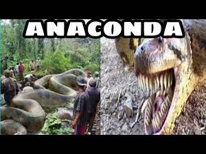 TOP BIGGEST ANACONDA IN THE WORLD!