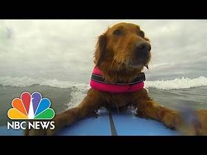 Surfing Dog Inspires Disabled Children | NBC News