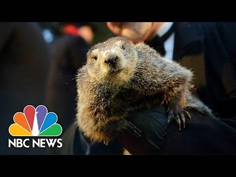 Watch Live: Punxsutawney Phil Gives His Groundhog Day Prediction | NBC News