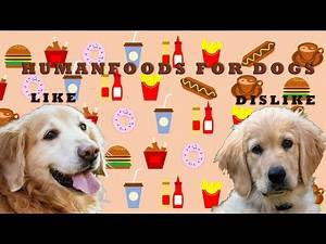 The Ultimate List of Human Foods Dogs Can and Can't Eat