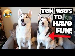 10 Fun Things To Do With A Siberian Husky When You're Stuck Indoors!