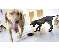 A better canine dog training inc overland park ks Video