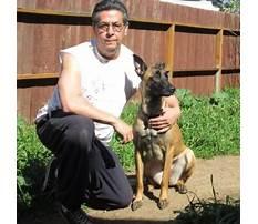 A better way dog training.aspx Video