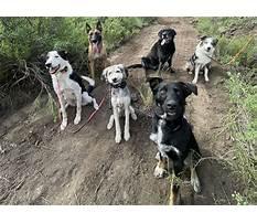 Affordable dog training denver.aspx Video