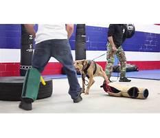 Aggressive dog training dfw Video