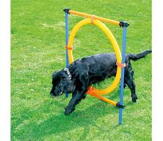 Agility training products for small dogs Video