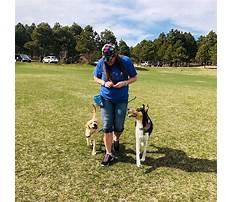Akron dog training colorado springs.aspx Video