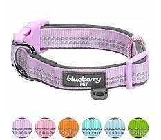 Amazon dog leash amazon baapet and blueberry dog leash and blue collar Video