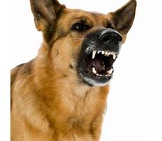 Angry dog bark growl sound effects high quality Video