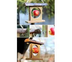 Apple bird feeders craft Video
