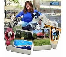 Atlanta dog training and pet resort cumming ga Video