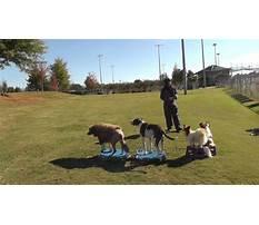Atlanta dog training Video