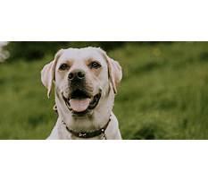 Awesome dawgs dog training llc.aspx Video