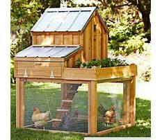 Backyard chicken coop design Video