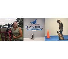 Bayshore companion dog training club Video
