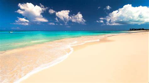 Beach Ecosystem