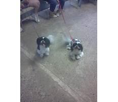 Best friend dog training littlestown pa.aspx Video