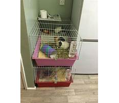 Best indoor cages for rabbits Video