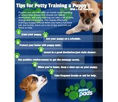 Best way to potty train dog.aspx Video
