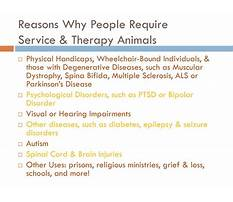 Bipolar service dog training.aspx Video
