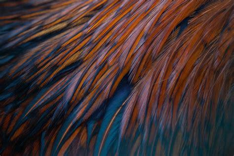 Bird Feather Texture