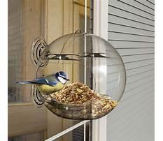 Bird feeder window.aspx Video