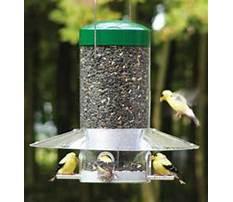 Bird feeders for sale canada Video