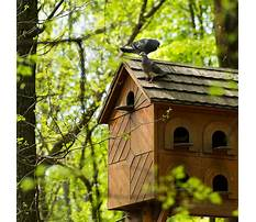 Birdhouse woodworking projects Video