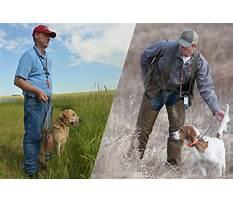 Buckman dog training.aspx Video